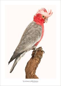 Set kaarten vogels
