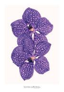Set-kaarten-floral