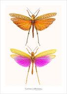 Set-kaarten-insecten
