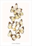 Set-kaarten-vlinders